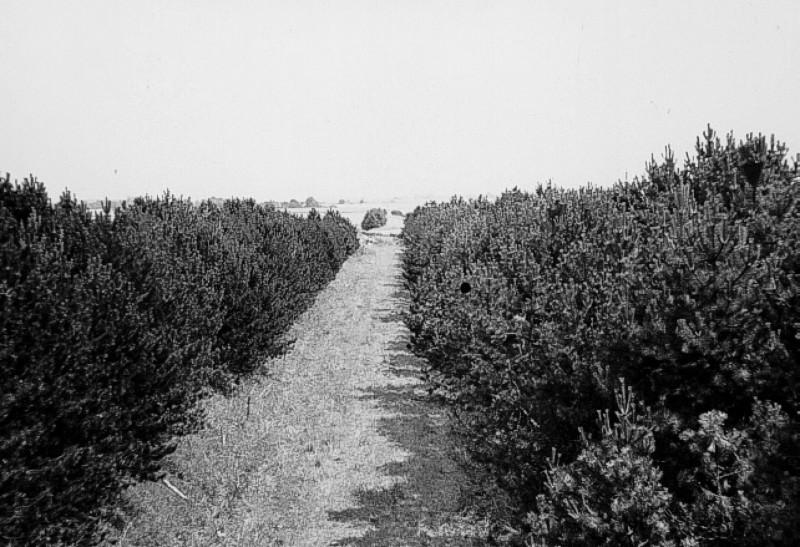 12836-Midtsjaellandsbanen-Frederikssund-oest..jpg (800×547)