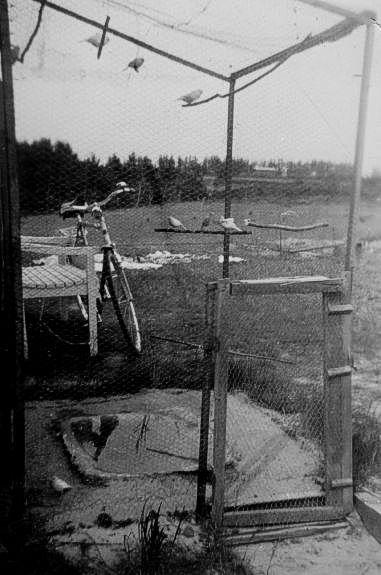 Ro2-.Kenya.Fuglebur.1952.jpg (381×575)