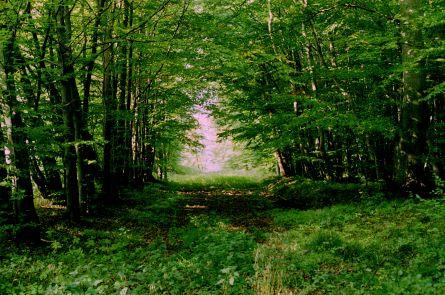 http://www.mjk-h0.dk/evp_Maar/o-1196.x.30.gds.teglv-sidespor.duemose_trb.1.10.2002.jpg
