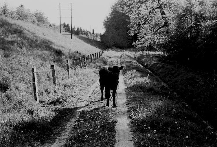 http://www.mjk-h0.dk/evp_Soroe/24.ii.27.v.knudstrup.maj_1957.jpg